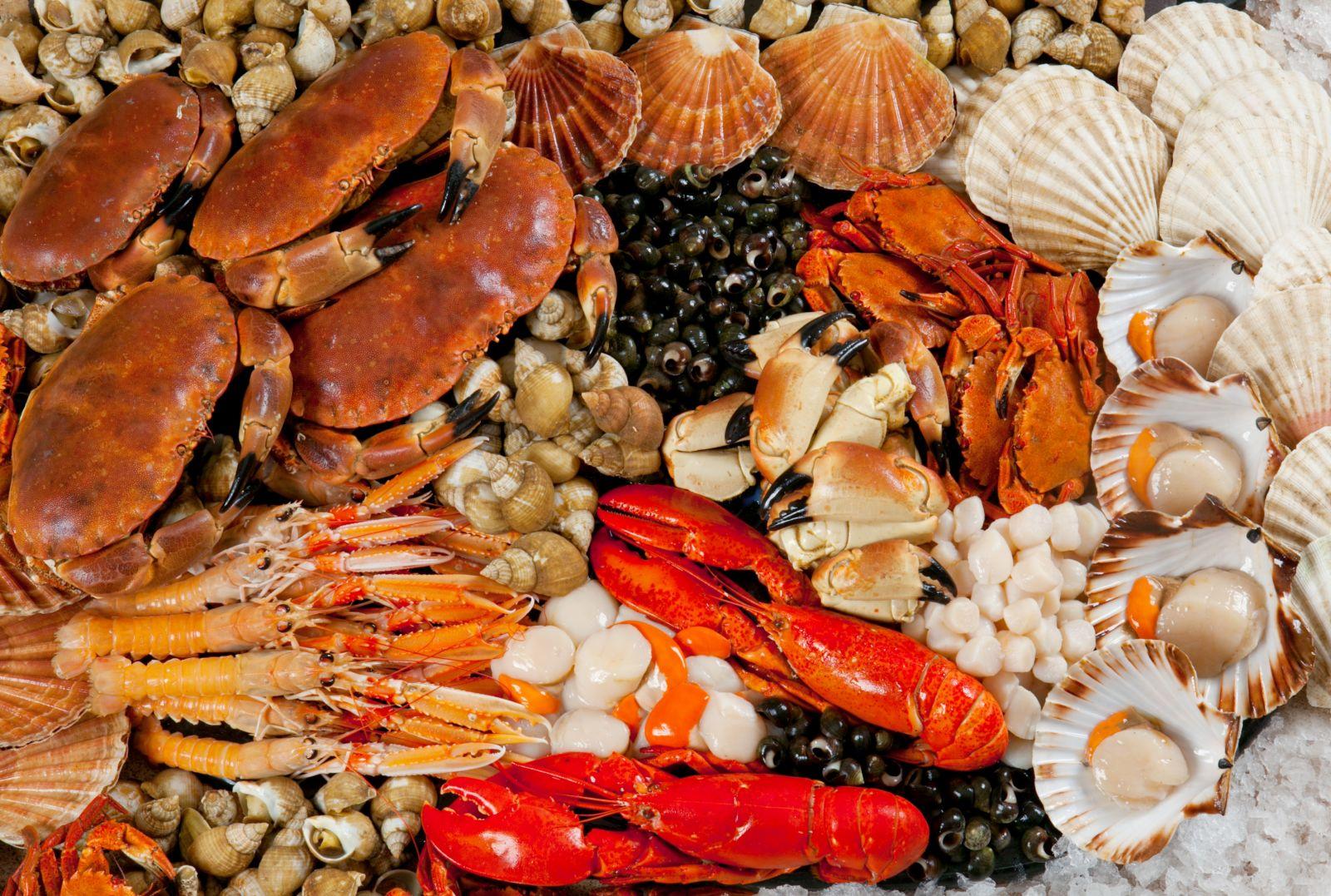 Nguồn dinh dưỡng dồi dào có từ hải sản-2