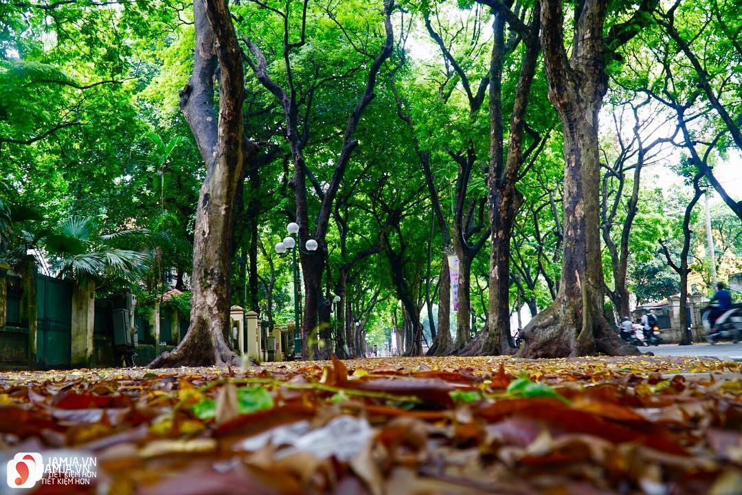Con đường tình yêu Phan Đình Phùng